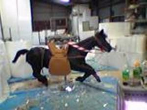 テレビ番組用。 等身大の馬。